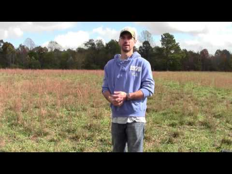 Problems with Sage in Pasture Video
