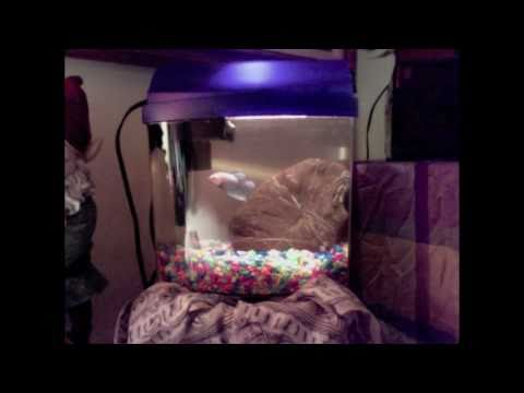 fish tales with barry & ashley