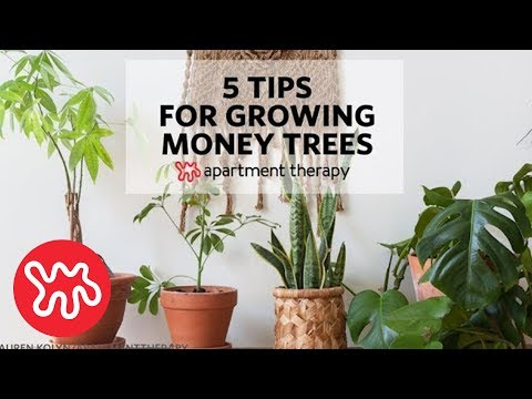 5 Tips For Growing Money Trees
