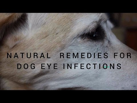 Dog Eye Infections: Natural Remedies