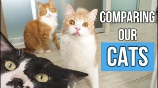 Comparing our cats