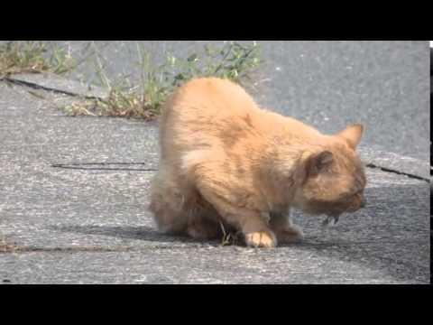 ビッコの野良猫 Stray cat you have injured his leg