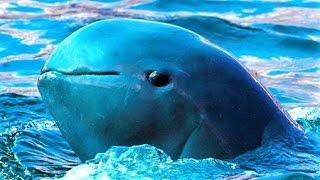 14 Endangered Sea Creatures