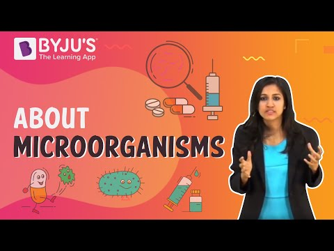Microorganisms 06 - Save Yourself with Vaccines and Antibiotics