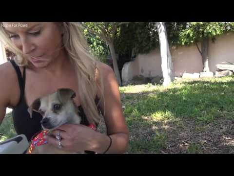 Dog rescued thanks to microchip