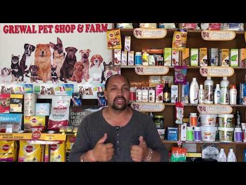 Pet Care - Dog heat Sign &  Mating Tips - Bhola Shola