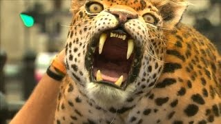 ROBOT LEOPARD Walks The Streets of London!   What