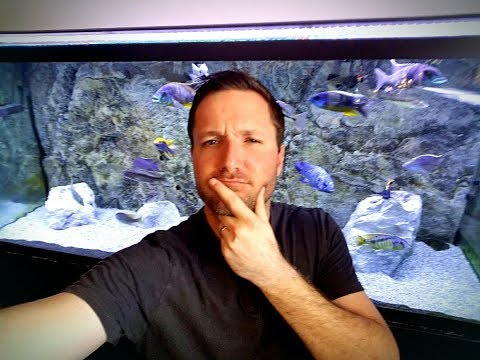 Fishroom Q&A With Your Questions...Fish I Regret Buying? Tattoos? I Look Like Who?