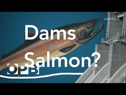Salmon or Dams, Do We Have To Choose?