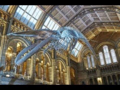 Natalie Cooper: Cetacean CSI: retracing Hope's final movements
