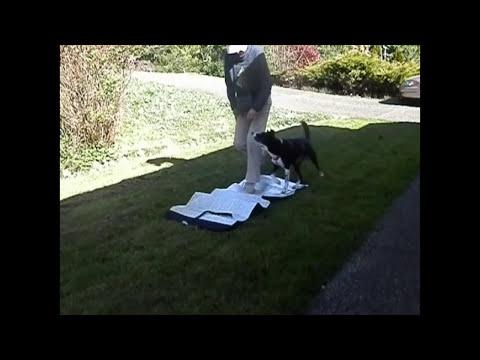Loose Leash Walking Level 1  & 2 promo video