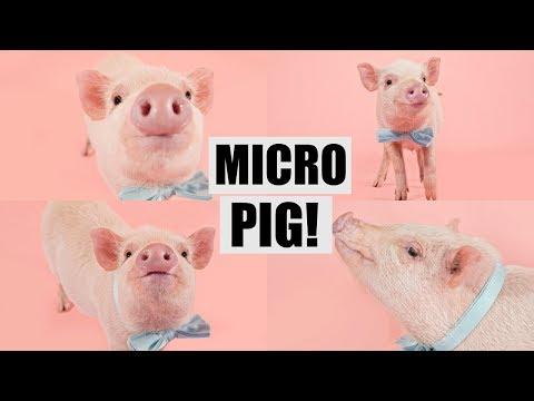 I GOT A MICRO PIG! £300 HUGE GIVEAWAY