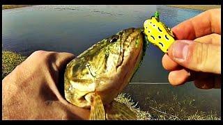 Pesca De Traíra - Crazy Frog Da Yara - Teste