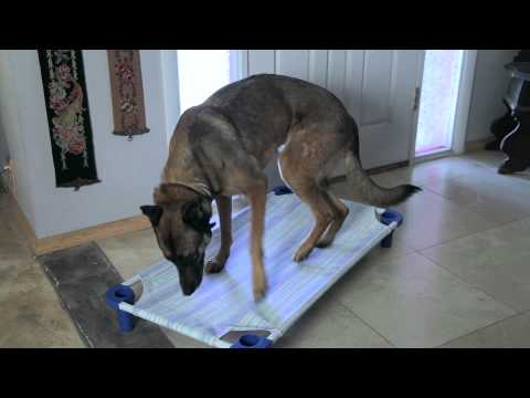 How to Prevent a Dog From Chewing on Baseboard Trim : Dog Behavior & Training