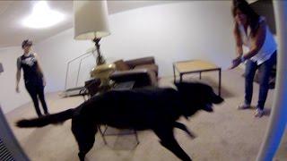 Luna The Wolfdog Remembers Mel