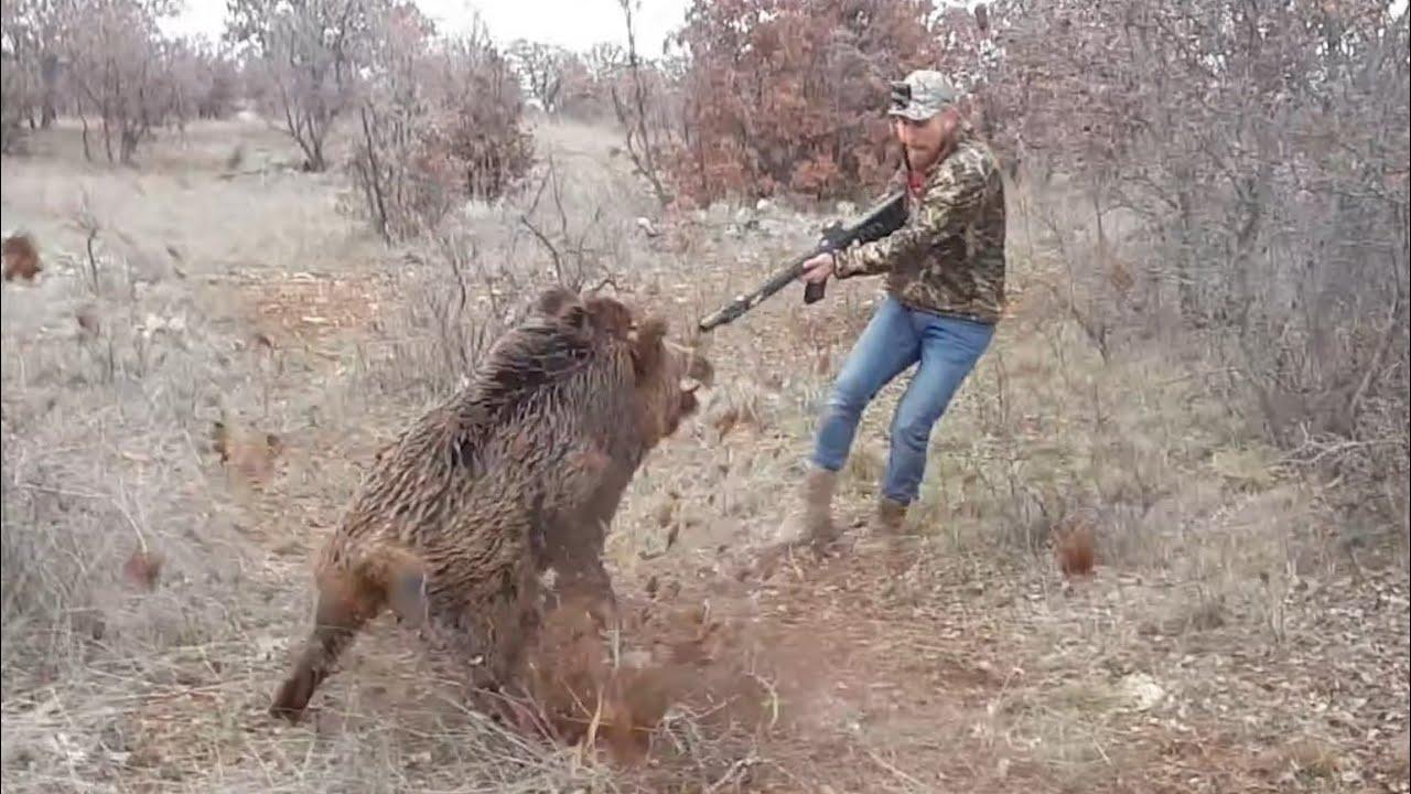 Son 4 sezondaki aksiyon dolu tüm yaban domuzu avlarım / Wild boar Hunting!