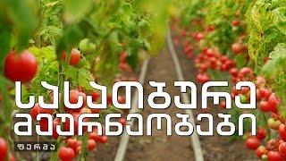 ფერმა - ორი ფერმერი - დამწყები და წარმატებული