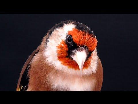 Secret Bird Language: How to communicate trust to your bird