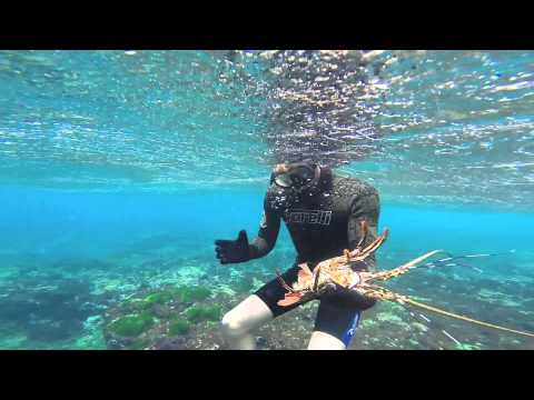 Lobster Diving at Lord Howe Island