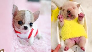 Baby Dogs - Cute and Funny Dog Videos Compilation #7 | Aww Animals