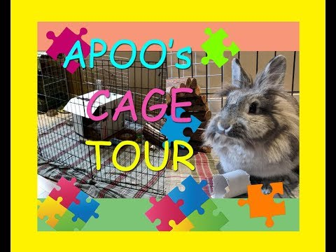 Apoo the Bunny Cage Tour