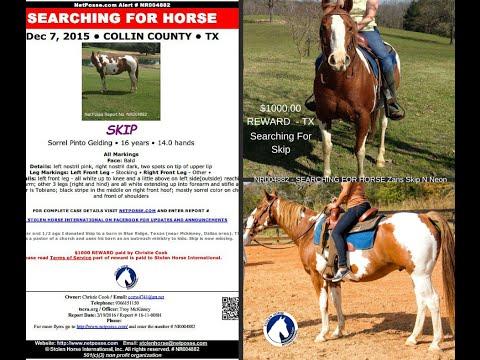 Searching for Skip, Missing from Texas - NetPosse Alert