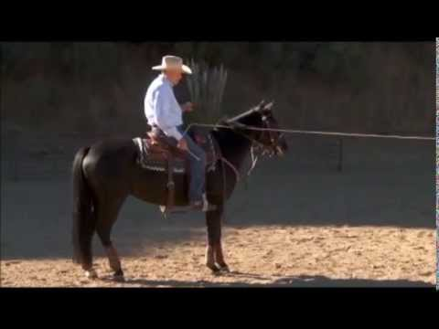 Preparing Your Horse to Rope