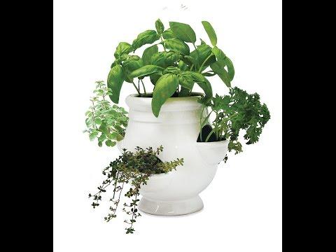 Garden | Hydroponic Herb Garden