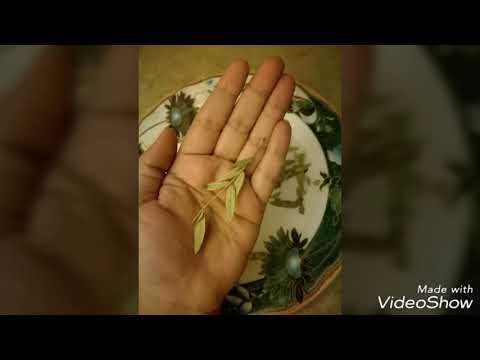 tea or kahwa for Weight loss | sana maki qahwa | magical water for weight loss | senna/cenna leaves