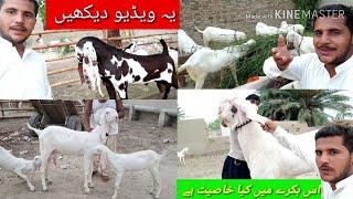 Bade Bakre ki kharidari WhatsApp number 03410341995Sabir