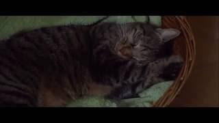 Trailer de Kater — Tomcat subtitulado en inglés (HD)