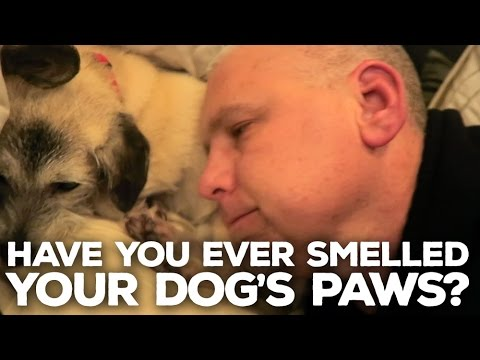 042 - Have You Ever Smelled Your Dog's Paws?