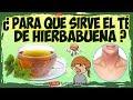 Para que Sirve el Te de Hierbabuena - 8 Propiedades y Beneficios  del Te de Hierbabuena 🌿☘