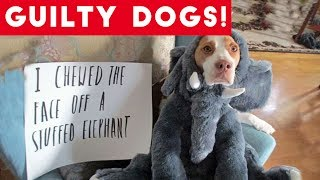 Cute Dogs feel guilty - Funny guilty dog and animal compilation