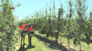 A Career in Fruit Production (JTJ82013)