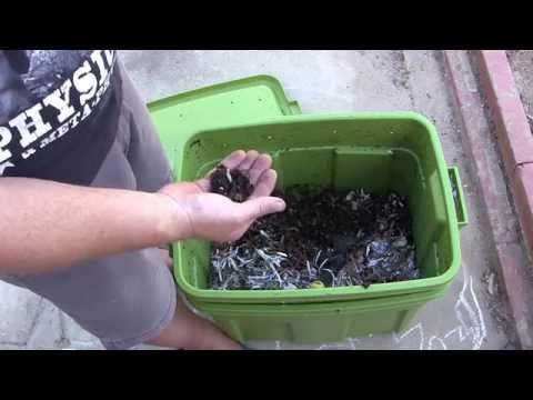Worm Composting update #1 - The Good, The Bad and The Slimey