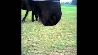 Pferdeficken Freies Tiergeschlecht,