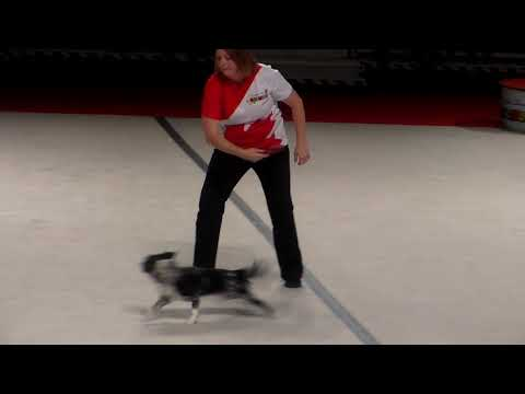 Superdogs Frisbee Challenge at Toronto's CNE!