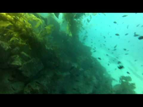 Catalina Island Diving, Filmed with GoPro Hero2 with SRP Blurfix, Filter Comparison Video