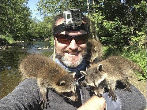 Incredible Baby Raccoon Encounter