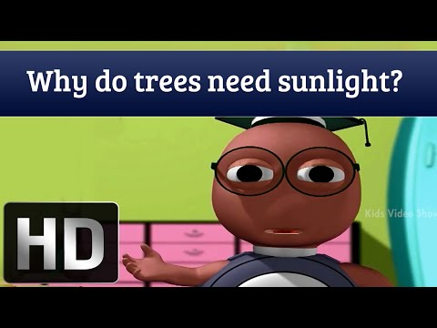 Why Do Trees Need Sunlight?  | Interesting Facts About Plants