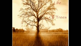 """""""THE SECRET LIFE OF TREES"""" RELAX and CHILL OUT to 75 mins of Original Music by Tracy Bartelle"""