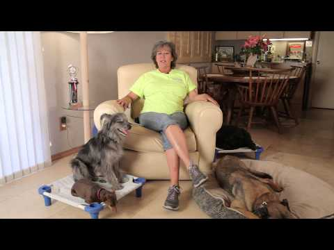Why Do Dogs Bark When the Doorbell Rings? : Dog Training & Care
