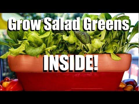 How to Grow Salad Greens INSIDE! // Indoor Garden Series #2