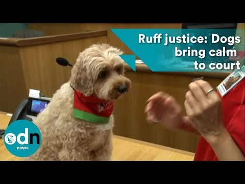 Ruff justice: Dogs bring calm to court