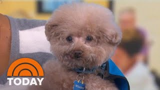 Hero Dog Awards: Meet Some Of The Heroic Finalists Defying The Odds | TODAY