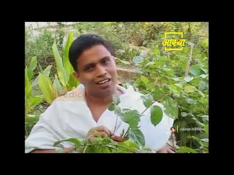 Ayurvedic Treatment of Mental Diseases | | Acharya Balkrishna (Episode 1)