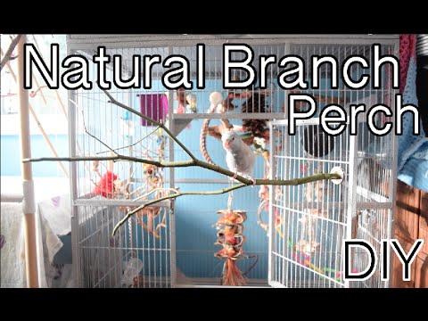 Natural Branch Perches | DIY