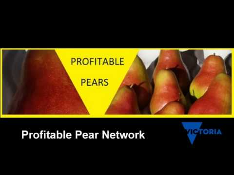 Understanding mites in deciduous tree fruit orchards