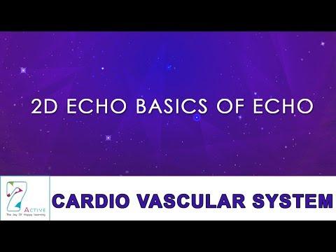 2D ECHO BASICS OF ECHO